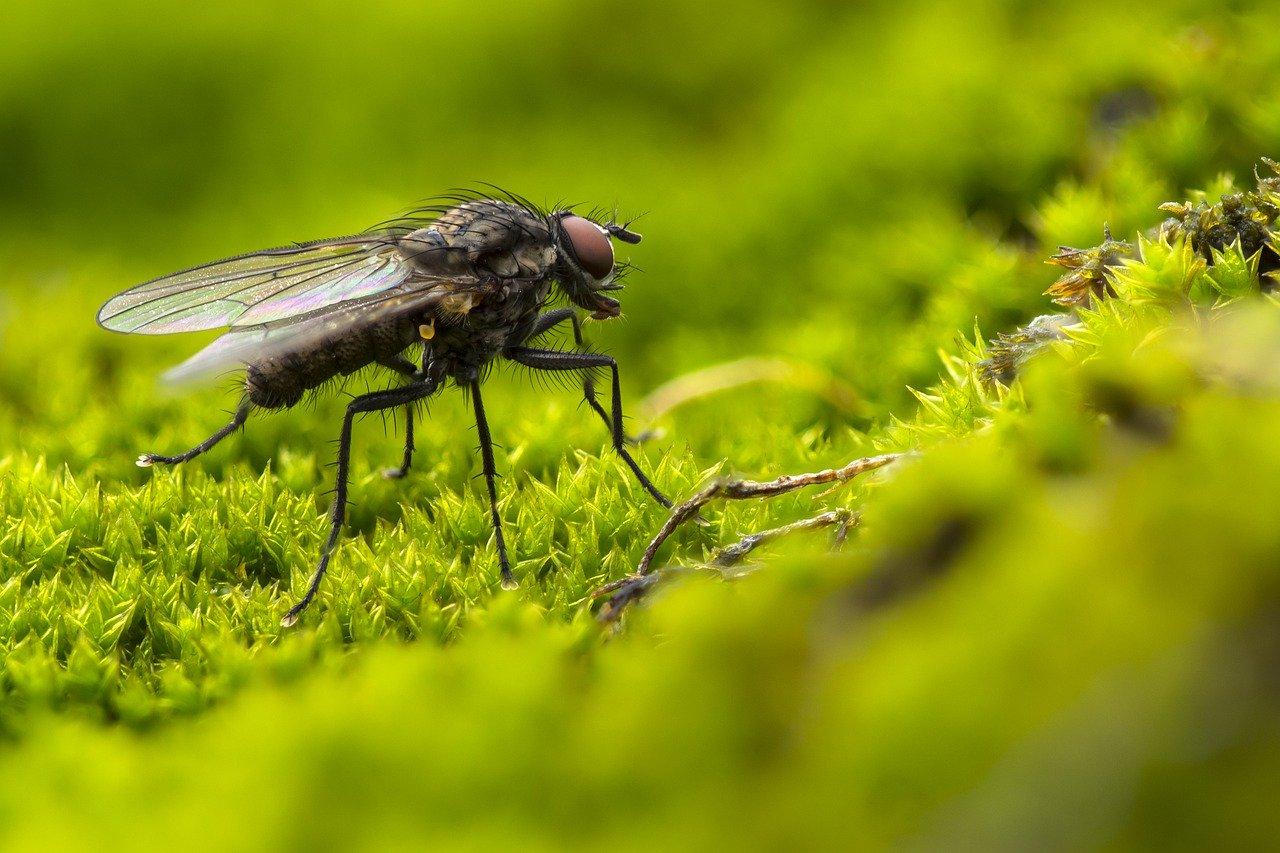 Ľudia vs hmyz